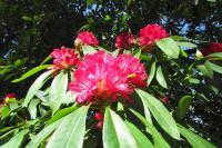 flowershowth04136