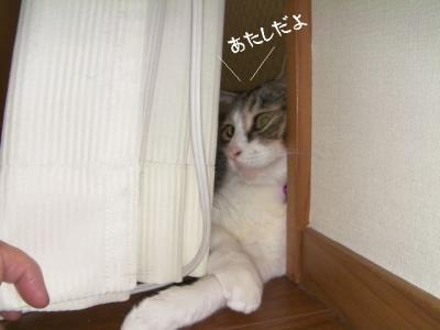 のみ取り生活02