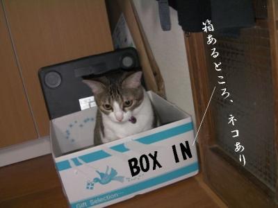 のみ取り生活06