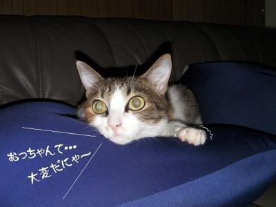 山猫は面白い01