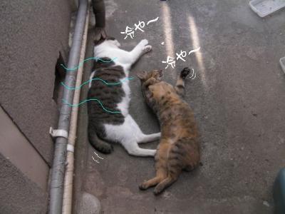 猫わさわさ02