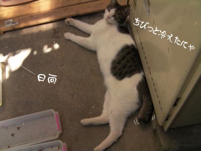猫わさわさ04