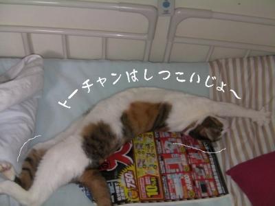 家猫百科04