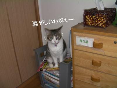 家猫百科05