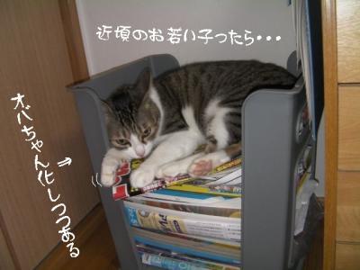 家猫百科06