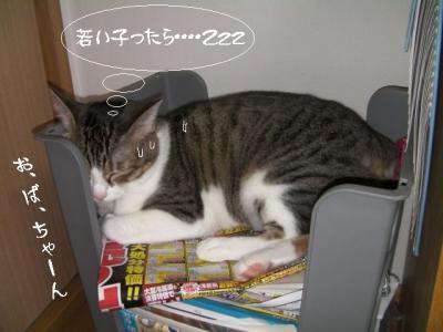 家猫百科07