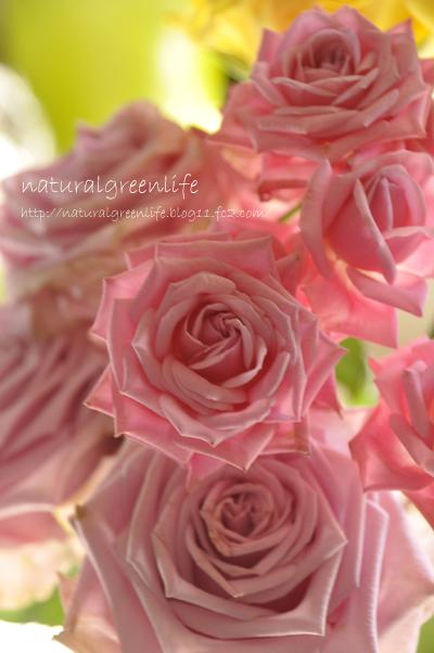 薔薇 スプレーピンク