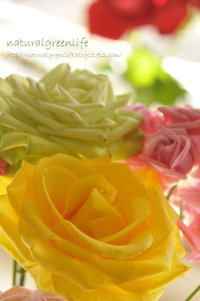 カラフルな薔薇たち