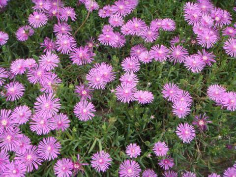 垣根花壇の花