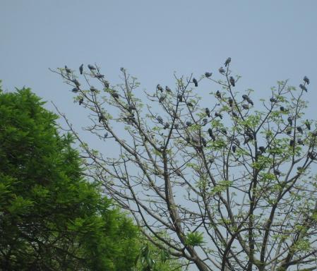pigeon-tree-apr13.jpg