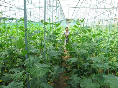 strawberryfarm-020413a.jpg