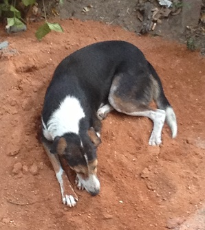 straydog130513.jpg
