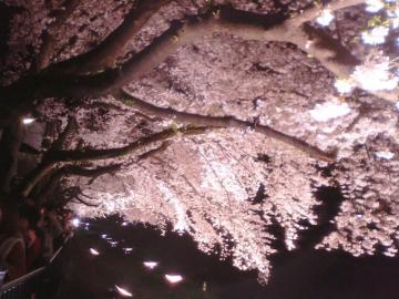 夜桜3.29 2