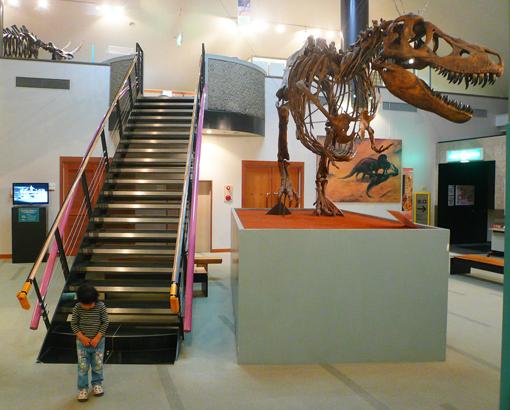 タルボサウルス2