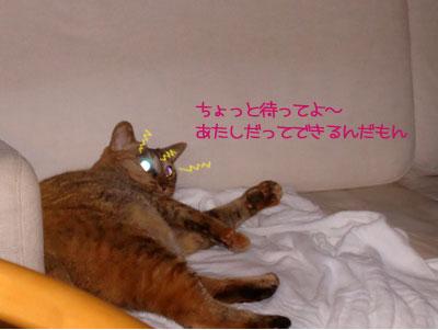 chami_koma14.jpg