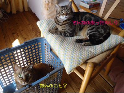 chami_koma15.jpg