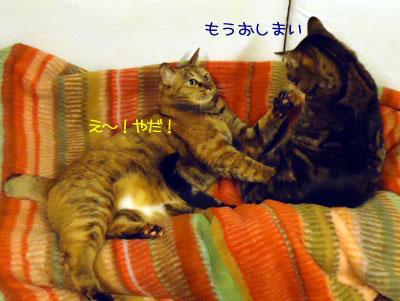 chami_koma21.jpg