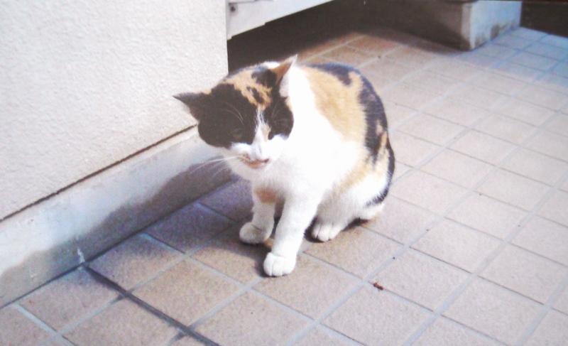 岩槻 里親探し猫4