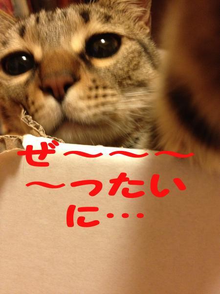 061-1_convert_20140131190613.jpg