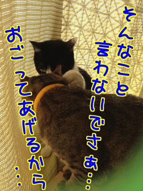 b0qcGmJeilf7NZT1392259140_1392259536.jpg