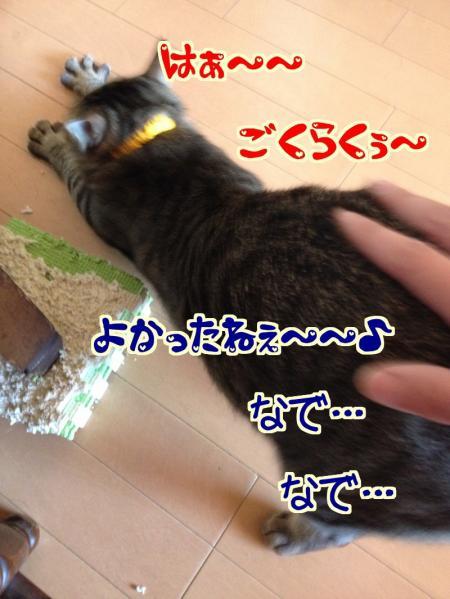 s-03_convert_20140131103854.jpg