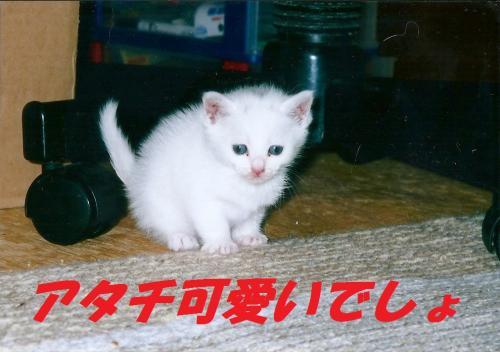 繧ケ繧ュ繝」繝ウ0001+(2)_convert_20130818093154