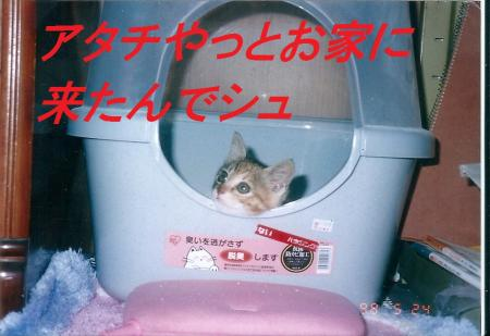 繧ケ繧ュ繝」繝ウ0001_convert_20130831071858