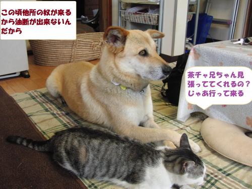 CIMG4676_convert_20130705092651.jpg