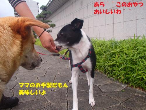P6260077_convert_20130627085743.jpg