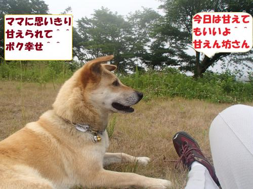P6270103_convert_20130628084017.jpg