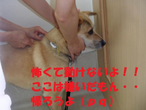 P6280123_convert_20130630093823.jpg
