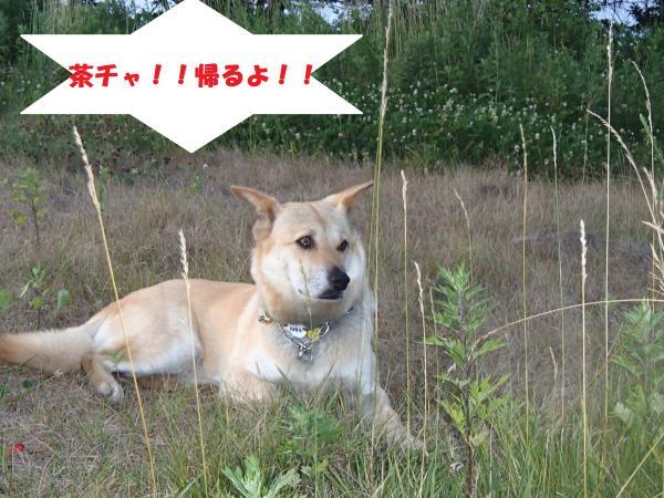 P7110282_convert_20130712103322.jpg