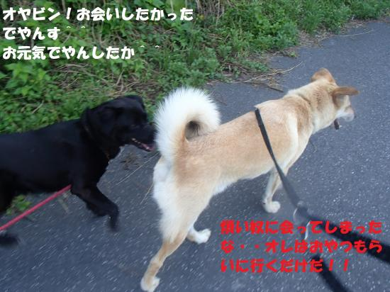 P7120283_convert_20130712164341.jpg