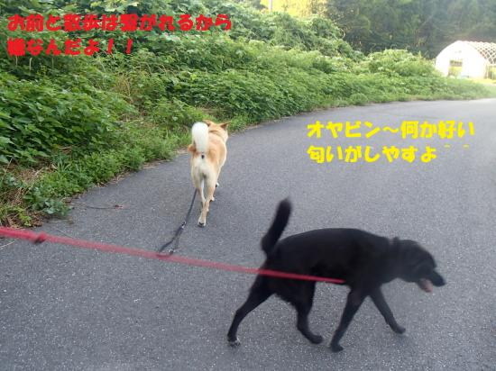P7120286_convert_20130712164409.jpg