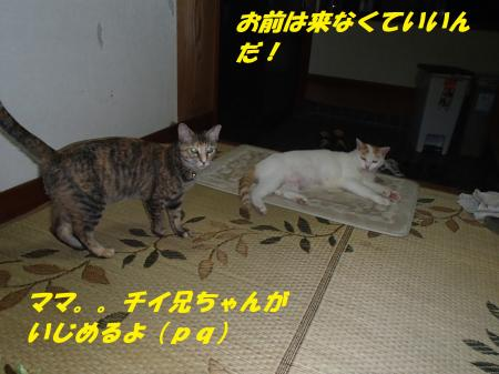 P7200405_convert_20130721091424.jpg