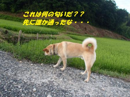 P7210406_convert_20130721091459.jpg