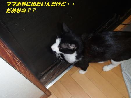 P7250037_convert_20130725080759.jpg