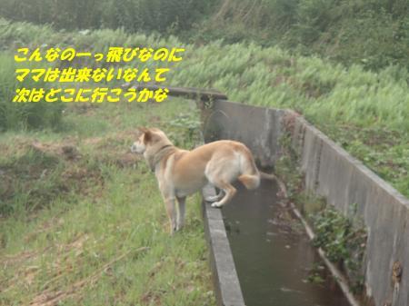 P7260059_convert_20130727090220.jpg