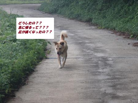 P7270075_convert_20130728090941.jpg