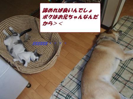 P7280104_convert_20130729095653.jpg