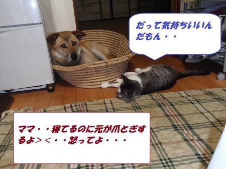 P7290107_convert_20130729095730.jpg