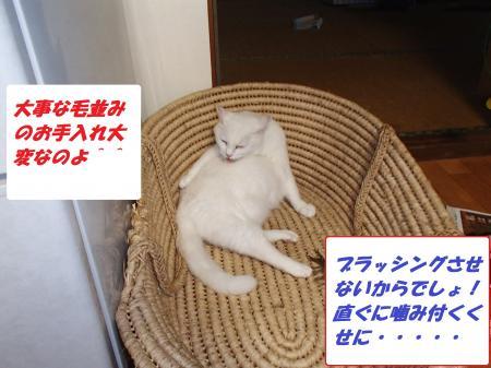 P7290113_convert_20130730111515.jpg