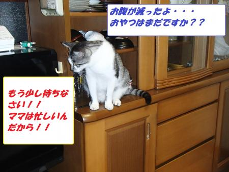 P7290116_convert_20130730111548.jpg