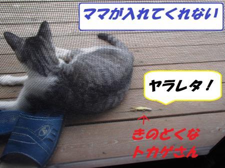 P7300122_convert_20130730111611.jpg