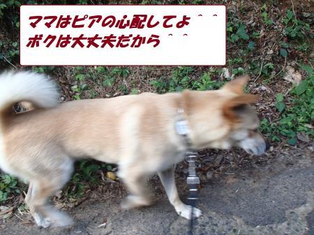 P8100267_convert_20130810081305.jpg