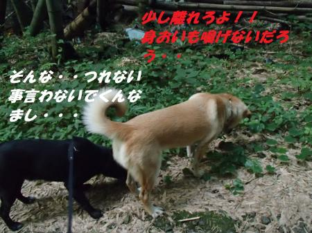 P8120316_convert_20130813091923.jpg