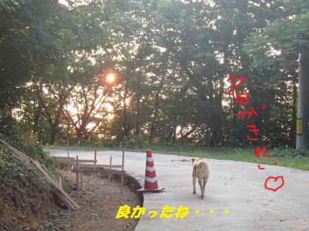 P8130346_convert_20130814091438.jpg