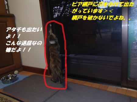P8190400_convert_20130819084337.jpg