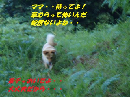P8200410_convert_20130820082319.jpg