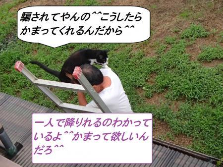 P9010561_convert_20130901112937.jpg